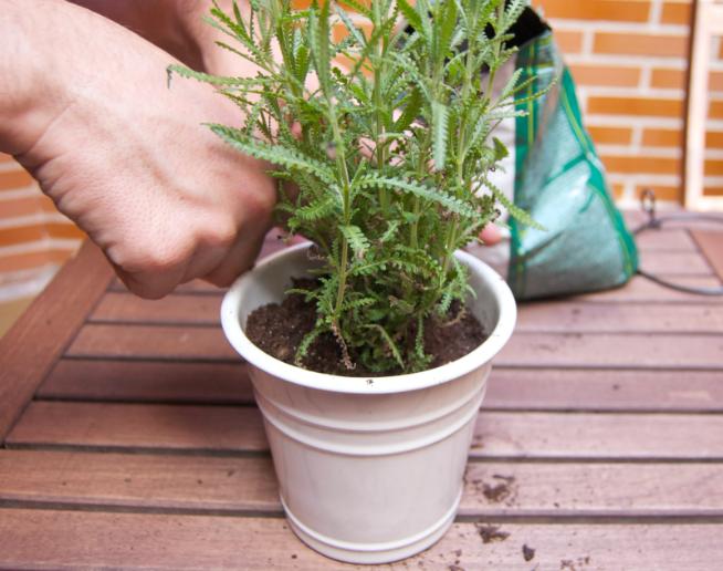 Plantamos en un recipiente adecuado