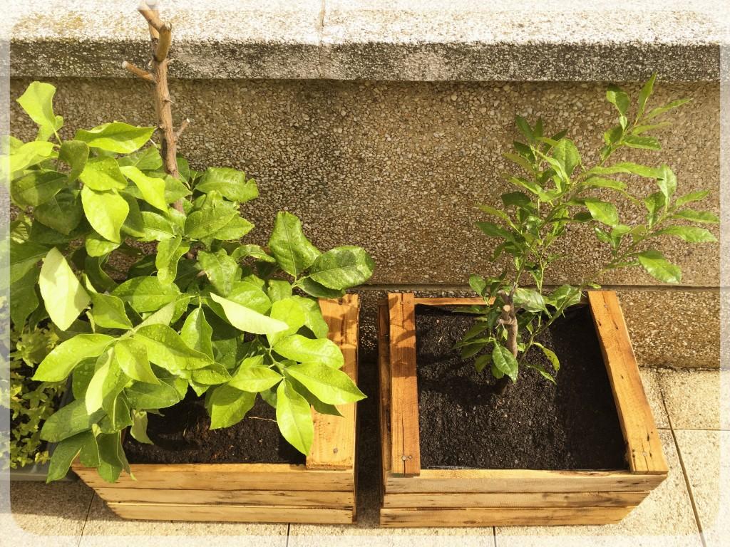 Jardinera con cajas de madera